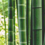 Waarom moet je switchen naar bamboe kleding?